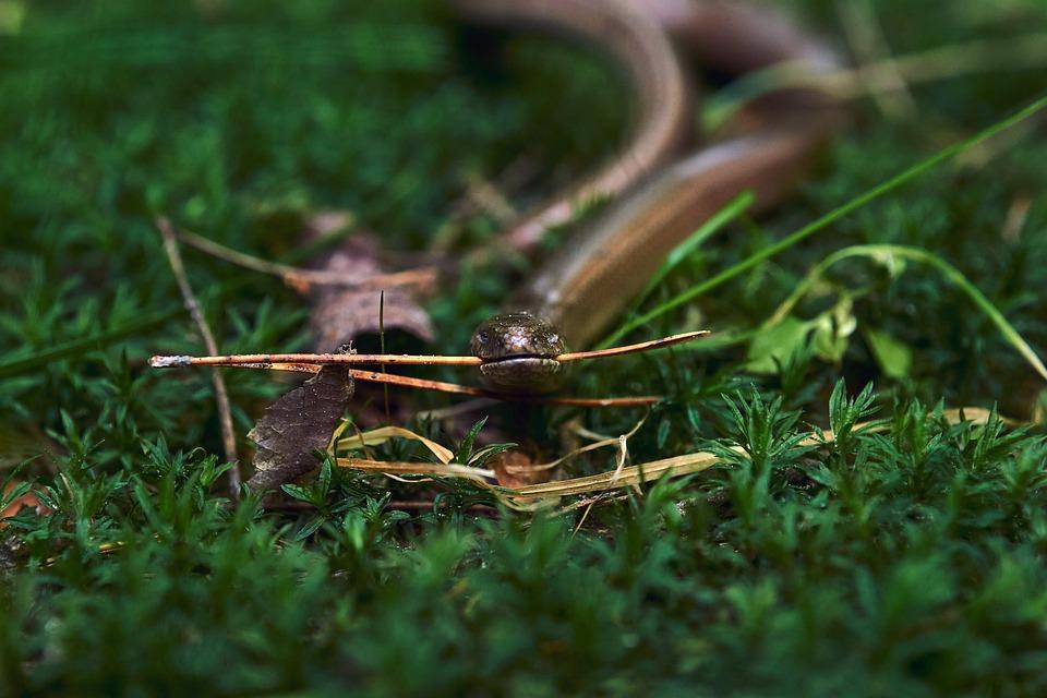 Прогонване на змии от двора - време е за действие (1)