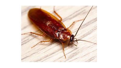 Устройства против хлебарки от вносител на изгодни цени!