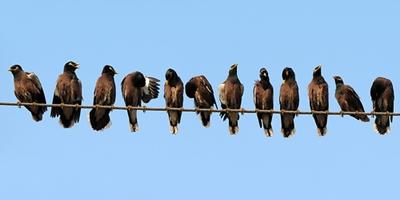 Птицегон ефективно решение срещу птици