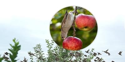 Птицегони за защита на градината