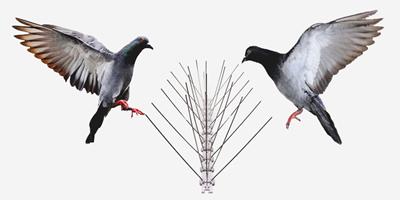 Стоманени пет редови шипове против птици на супер цена!