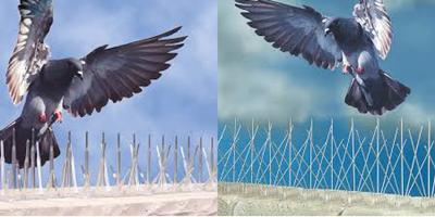 Пет редови шипове против птици - качество на изгодна цена!