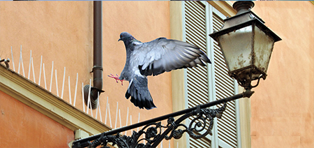 Шипове против птици на супер цени!