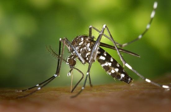 Най-ефикасните електронни устройства срещу комари - изгодно!
