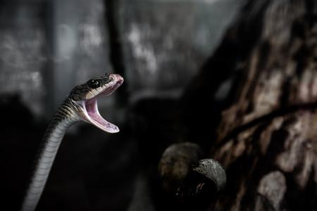 Репелент за змии 2