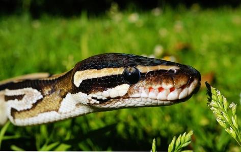 Репелент за змии 3