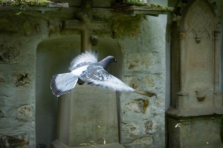 Шипове против гълъби 2