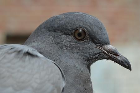 Шипове против гълъби 5