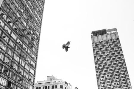 Шипове против птици 2