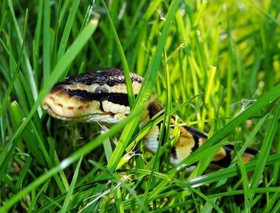 Уред против змии 2